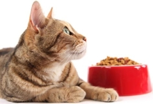Is Switching to Natural Pet Food Worth It?