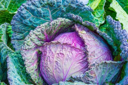 Cabbage is in season right now.  Now is the time to try some tasty and inexpensive recipes that use plenty of cabbage.