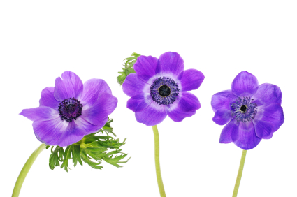 Turn that bouquet of spring flowers into decorative art!  Use one of these techniques to make pressed flower art.