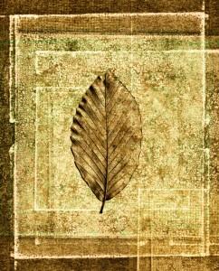 Leaf Art iStock