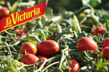 FREE La Victoria Organic Tomato Seeds